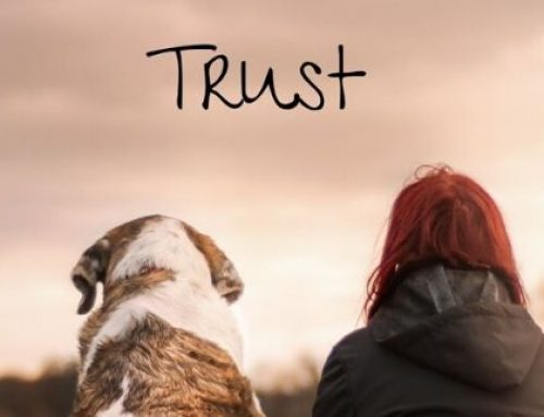 About Control and Trust